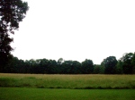 A landscape so pastoral, it looks to have been designed by Olmsted himself